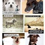 Comics a paisana cães